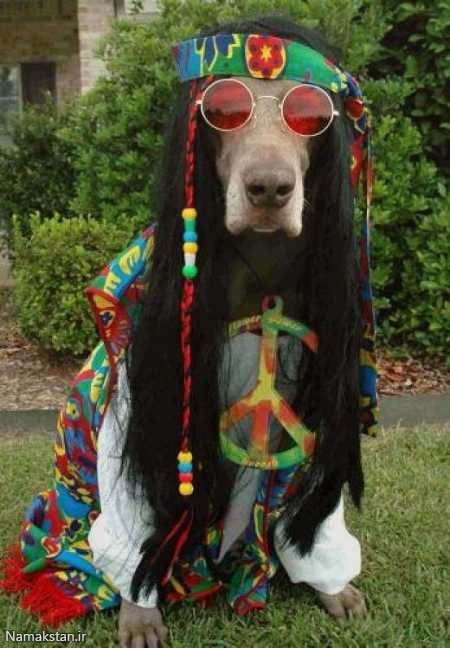 hippie-dog-love-and-peace
