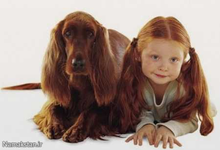 compare-people-with-dog-4-preview